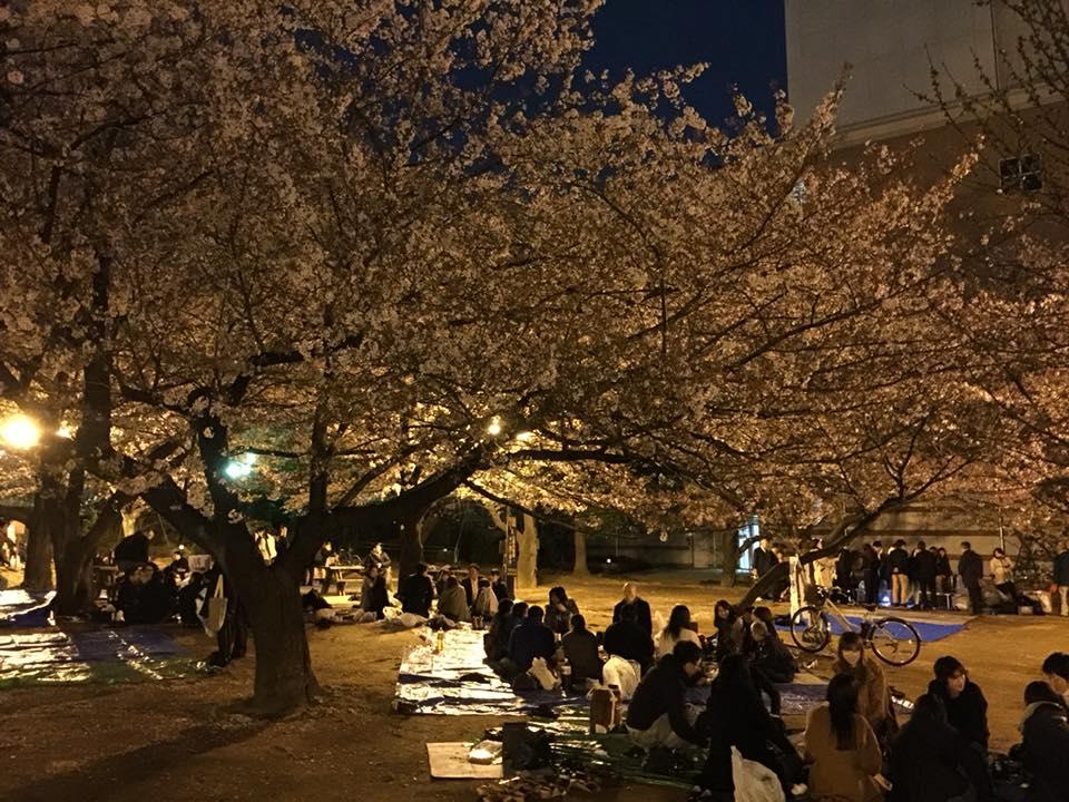 浜町公園での夜桜見物